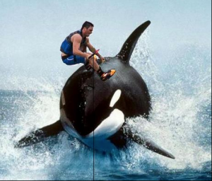 Wakeboarding whale